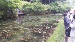 モネの池に到着!