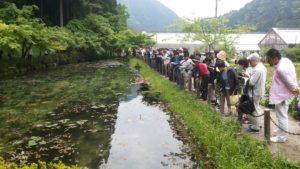 日本中からモネの池を見にきています。