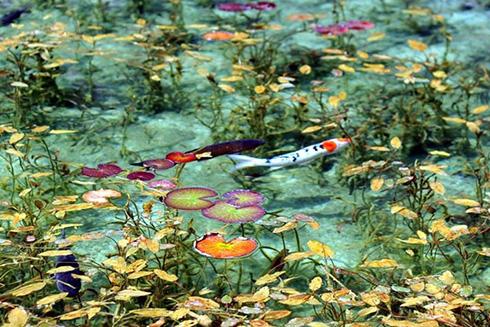 岐阜県関市板取「モネの池」へのアクセス、行き方、住所、時期まとめ
