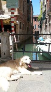 運河沿いに繋がれている犬