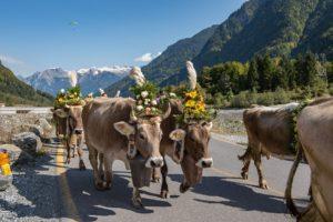 牛牽到北京還是牛