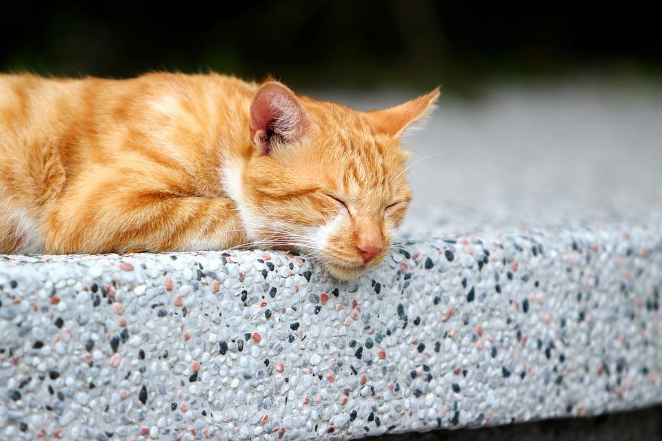 ぐだる猫「台湾の夏は暑いにゃ〜」