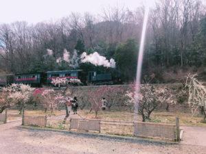目の前には梅園とSL機関車が