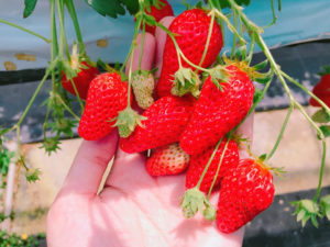 苺って可愛いですよね!