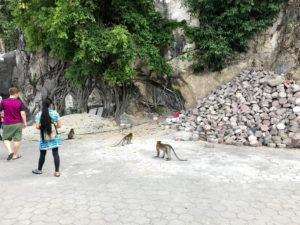 野生の猿がいたよ!