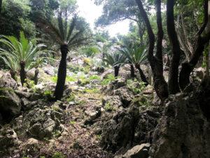 岩とソテツだらけの風景