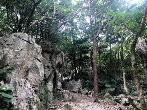 大石林山の山道
