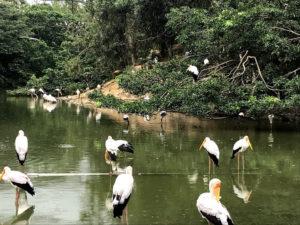 綺麗な鳥たち
