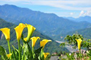 台湾の春(3月〜5月上旬)