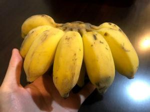 芭蕉という小ぶりなバナナ
