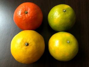 台湾の果物7:柑橘系