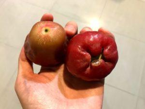 台湾の果物9:レンブ(蓮霧)