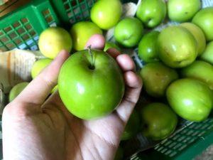 台湾の果物8:なつめ(棗子)