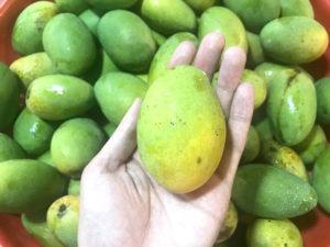 台湾の土芒果