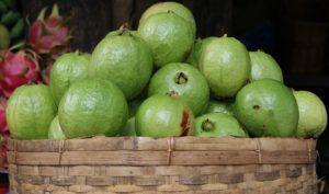台湾の果物13:グアバ(芭樂)
