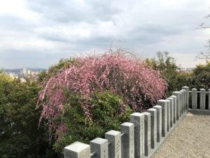 針綱神社からの景色