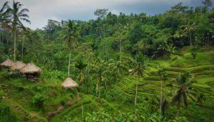 東南アジア旅行でおすすめの国⑤:インドネシア(写真はバリ島)