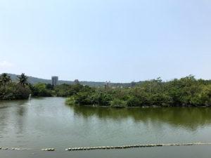 池などあって綺麗