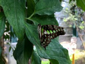 休憩中の美しい蝶々
