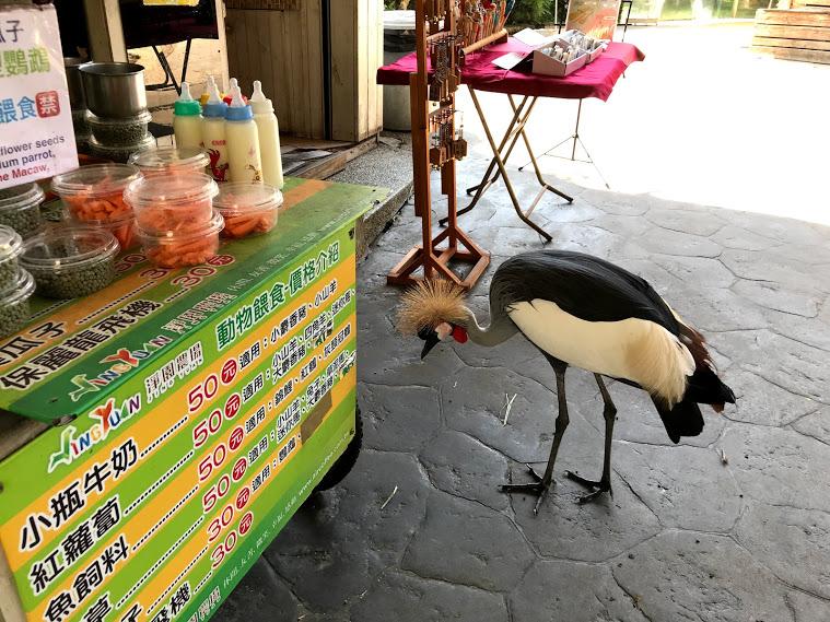 ホオジロカンムリヅルが売店内に侵入する瞬間をカメラはとらえた