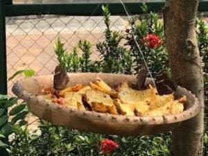 蝶々の食事タイム