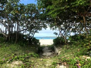 亜熱帯の植物が広がる沖縄北部