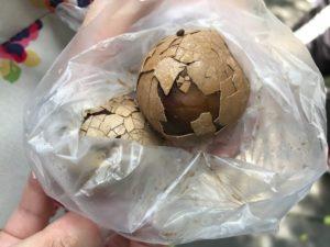 台湾の「茶葉蛋」を食べてみた感想